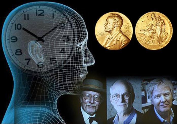 <H1>Nobel de Medicina: Premian a científicos que descubrieron gen del reloj biológico</H1>-<p style='font-weight: normal;'>Comité noruego otorgó el Premio Nobel en Medicina a los científicos que ayudaron a decifrar cómo funciona el reloj biológico.</P></H6>