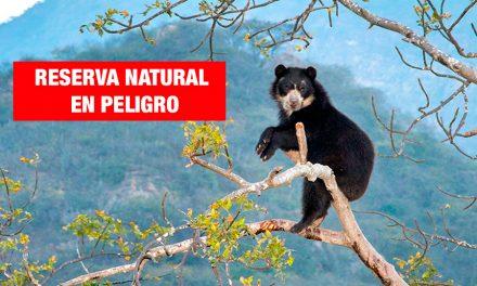 <H1>Reserva ecológica de Chaparrí es amenazada por traficantes de terrenos</H1>-<p style='font-weight: normal;'>A las autoridades parece no interesarles proteger la Reserva Ecológica y dejar que los invasores continúen asesinando a los pocos que la protegen.</P></H6>