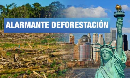 Más grande que Nueva York: así fue el tamaño de la deforestación de Perú en 2017