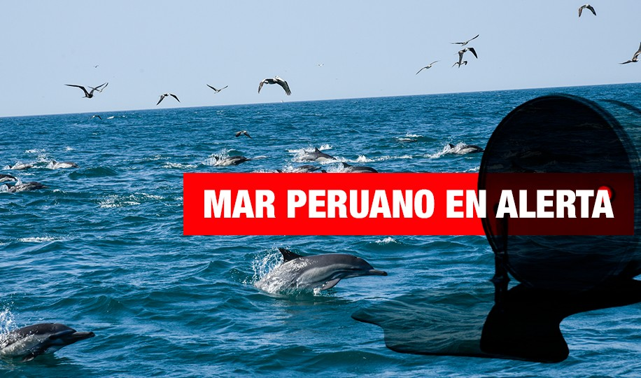 Perú: ¿conservación marina versus actividad petrolera?
