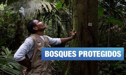Reservas comunales: cuando los bosques están en manos de los pueblos indígenas