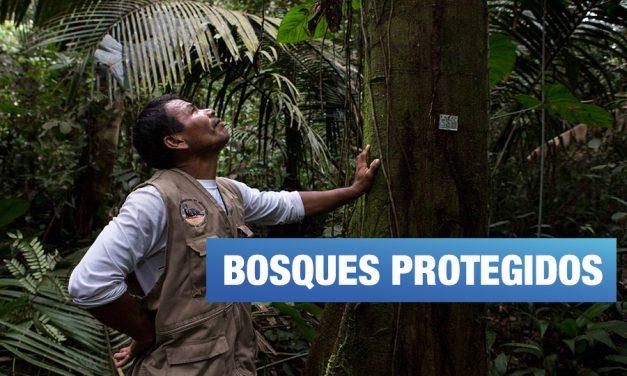<H1>Reservas comunales: cuando los bosques están en manos de los pueblos indígenas</H1>-<p style='font-weight: normal;'>Vía Mongabay</P></H6>
