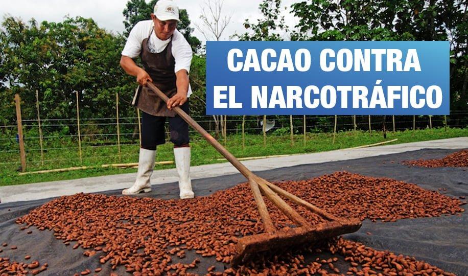 Perú: el cacao que salvó a un pueblo y a un área protegida del narcotráfico