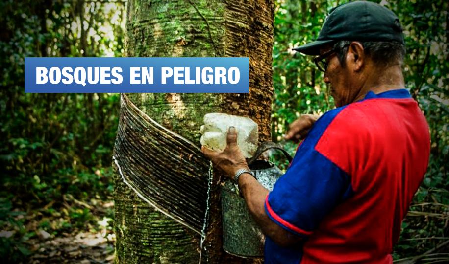4 regiones de la Amazonía peruana corren riesgo de quedarse sin bosques