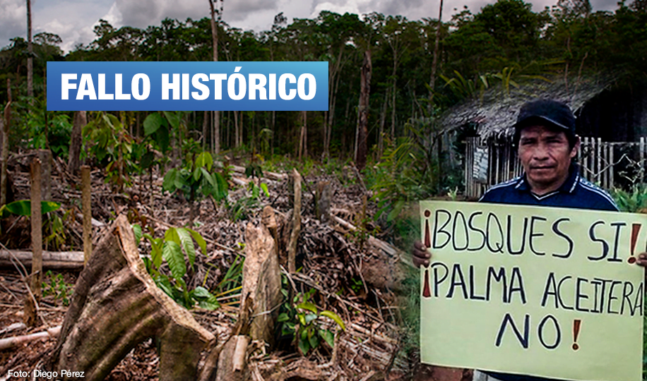 Loreto: Sentencian a funcionarios de empresa acusada por deforestar bosques en la Amazonía