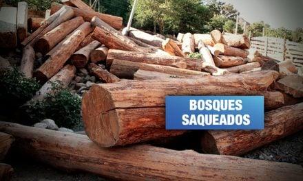 Cuidadores forestales en la red de tráfico de madera de 'Los Cumaleros del Oriente'