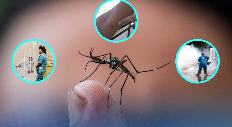 [GRÁFICA]: La amenaza del dengue