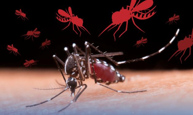 [GRÁFICA] ¿Perú es el único país de Latinoamérica afectado por el dengue?
