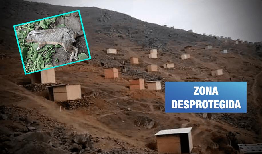 Lomas de Villa María: Invasores amenazan vecinos y matan animales ante inacción de MML