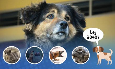 [GRÁFICA]: Ley contra el maltrato animal
