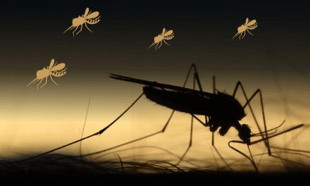 [GRÁFICA] El dengue ataca 8 veces más que en 2019