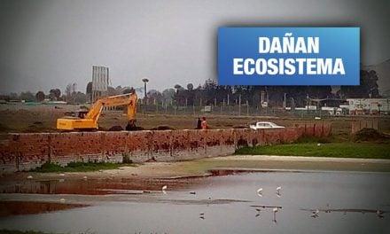 Empresa drena humedales de Lurín ante indiferencia de Lima y de Minam