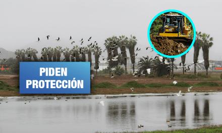 Quieren construir 'megacentro' comercial sobre humedales de Lurín