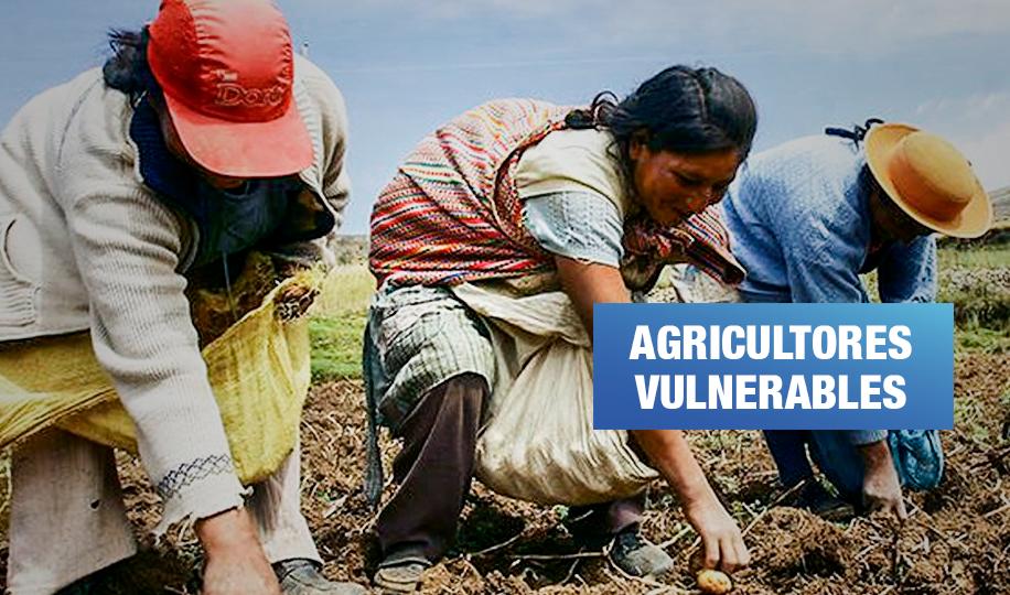 Agroexportadoras al margen de la cuarentena exponen a más de 61 mil trabajadores