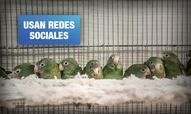 Traficantes continúan con comercio ilegal de especies amenazadas durante cuarentena