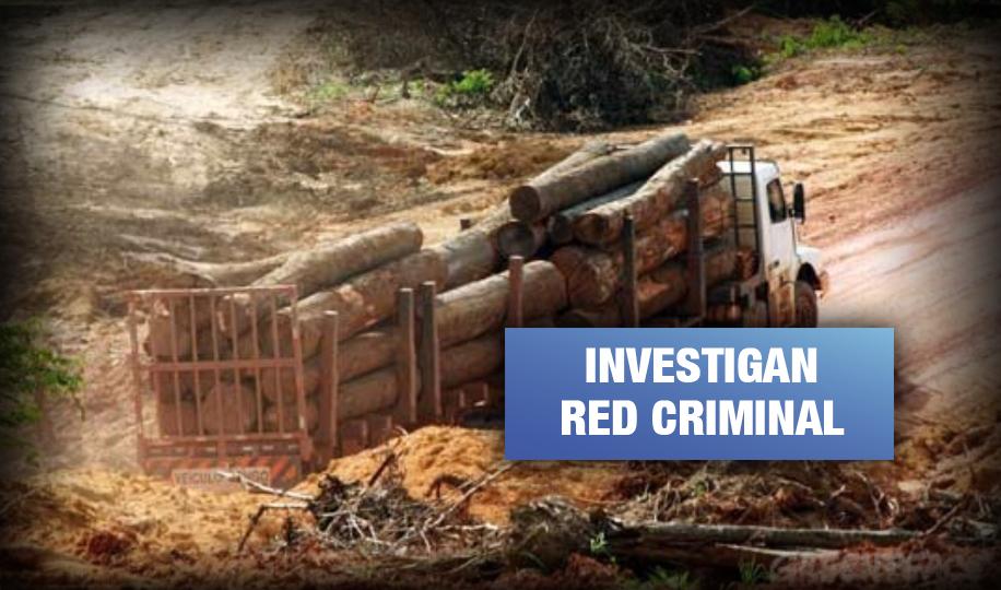 Madre de Dios: 14 funcionarios implicados en tráfico de madera en prisión preventiva