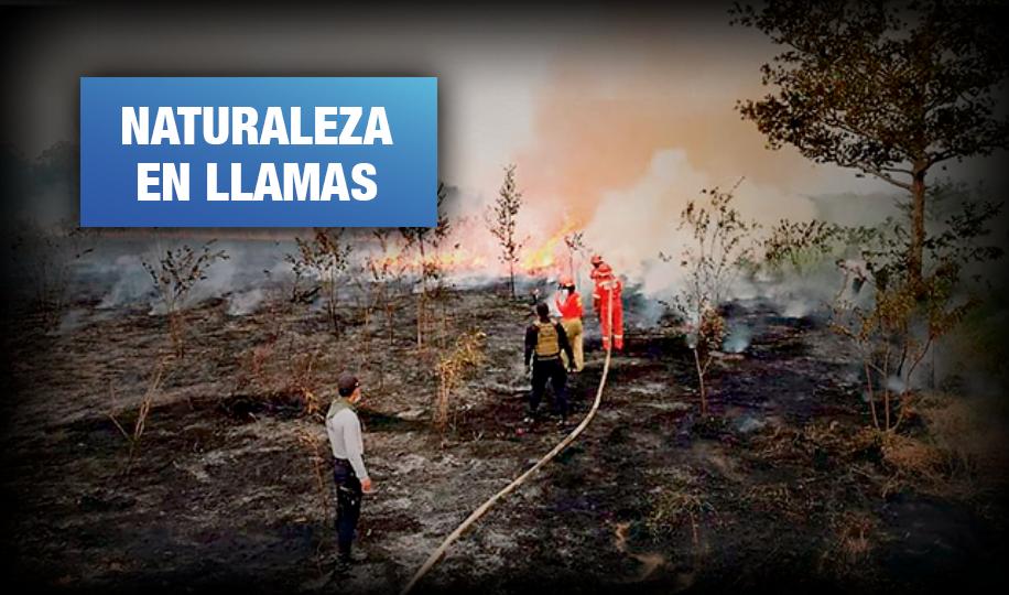 Madre de Dios: 14 incendios forestales y más de 7 mil focos de calor críticos