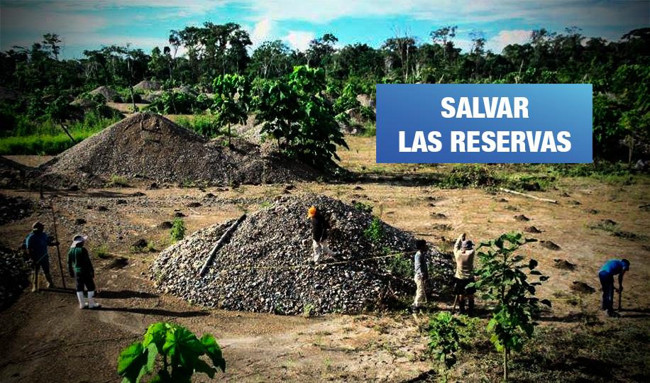 Los suelos degradados por la minería ilegal vuelven a la vida en la Amazonía del Perú