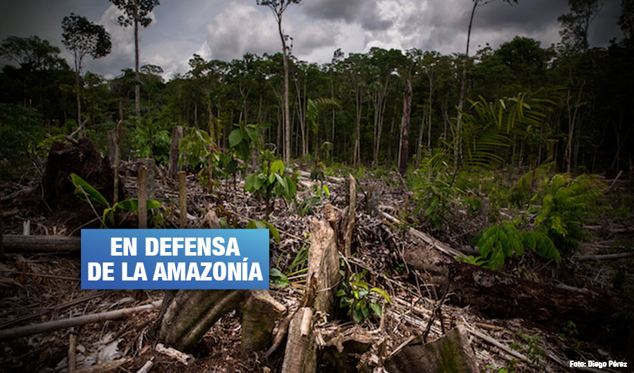 Tamshiyacu: Piden confirmar sentencia contra empresa que deforestó bosques en Loreto