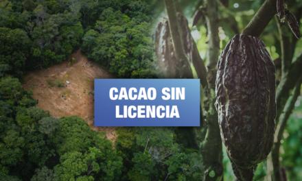 Empresa Tamshi es multada por comercializar cacao sin autorización ambiental