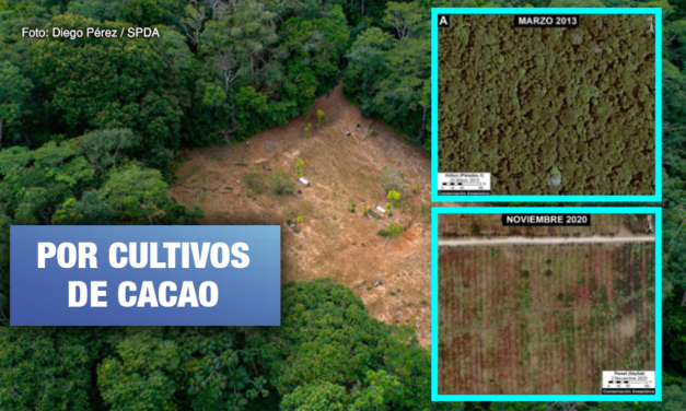 Tamshiyacu: Imágenes demuestran deforestación de bosques de 2013 a 2020