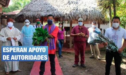 Voluntarios indígenas que combaten el COVID con plantas medicinales piden refuerzos ante segunda ola