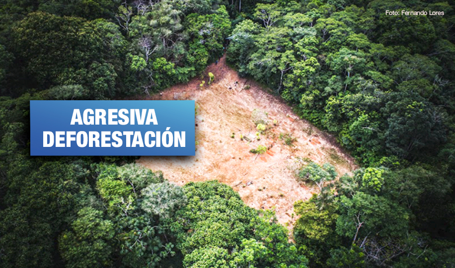 Perú perdió más de 2 millones de hectáreas de bosques en los últimos 20 años