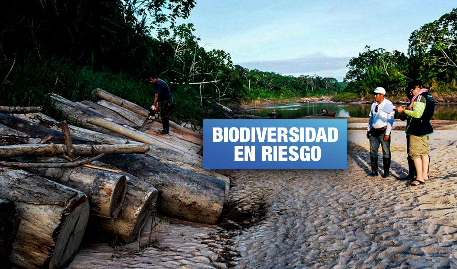 Leonardo DiCaprio alerta sobre construcción de carretera que atenta contra pueblos indígenas de Ucayali